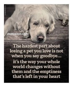lost of a pet dogs rainbow bridge Dog Loss Quotes, Dog Quotes Love, Losing A Dog Quotes, Sad Quotes, Lost Dog Quotes, Dog Death Quotes, Quotes About Dogs, Dog Best Friend Quotes, Cutest Animals