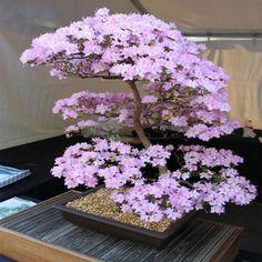 Product Type Bonsaisize Small Mediumclimate Temperateapplicable Constellation Taurusmodel Number Wuhaimeistyle Bonsai Plants Bonsai Garden Bonsai Flower