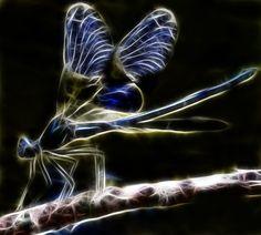 Fractal Dragonfly by minimoo64.deviantart.com