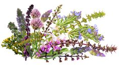 Beautiful mix of several herb flowers, such as Basil blossoms, Chive flowers, Lavender flowers, Savory blossoms, Mint blossoms, Rosemary flowers, etc.  Extremely flavorful and aromatic.  Amazing with meat dishes, desserts and cocktails!