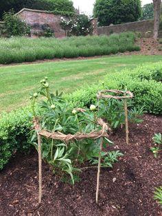 Für die Pfingstrosen - Garden Care, Garden Design and Gardening Supplies Potager Garden, Garden Trellis, Vegetable Garden, Garden Landscaping, Farm Gardens, Outdoor Gardens, Garden Farm, Garden Structures, Dream Garden