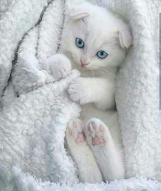 Someone from Alberta is cheating cat lovers by selling them shaved kittens. These shaved kittens were sold in the market as the hairless Sphynx cats. Kittens And Puppies, Cute Cats And Kittens, Baby Cats, I Love Cats, Kittens Cutest, Ragdoll Kittens, Bengal Cats, Sphynx Cat, Pretty Cats