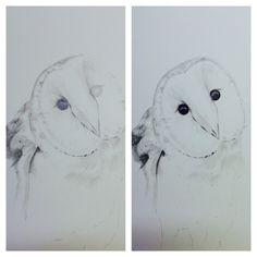 Barn Owl #owl # Barn Owl #Pencil #AndreaseArts