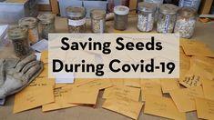 Saving Seeds, Sustainable Gardening, Starting A Vegetable Garden, Unique Gardens, Equinox, Cheers, Garden Ideas, Yard, How To Get