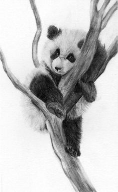 Panda by Rueppells-Fox on DeviantArt - Edit I entered this in `athenatt& Under 21 Traditional contest… I& a semi- - Realistic Animal Drawings, Pencil Drawings Of Animals, Realistic Pencil Drawings, Animal Sketches, Art Drawings Sketches, Cute Drawings, Hipster Drawings, Panda Sketch, Panda Drawing