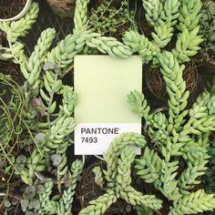 """359 харесвания, 2 коментара – k.— (@mydailypantone) в Instagram: """"• Outdoors Pantone."""""""
