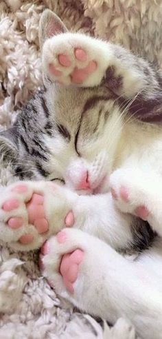 Adorable kitten toe beans!