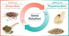 """How seeds can help regulate and support our menstrual cycle through """"seed rotation"""". How seed rotation boosts estrogen and progesterone levels in women."""