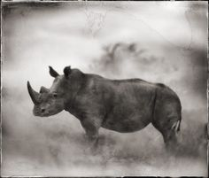 Nick Brandt Photography, RHINO IN DUST,  LEWA, 2003