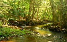 joki kuvia, metsä taustakuvia, luontokuvia, puut taustat