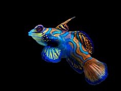 Ocean life windows 7 them Qhd Wallpaper, Fish Wallpaper, Windows Themes, Mandarin Fish, Color Bordo, Marine Fish Tanks, Fishing Life, Angel Fish, Beautiful Fish