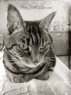 TinType and Black and White #CaturdayArt – Purrs Full of Love Photo Editor Free, Animal Rights, Animal Paintings, Art Blog, Animal Pictures, Photo Editing, Black And White, Pets, Drawings