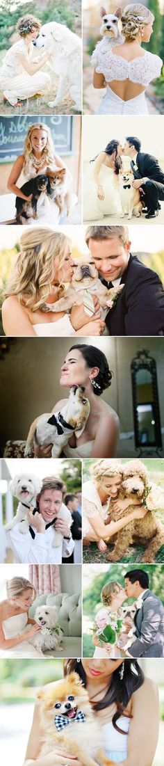 dogs at weddings!