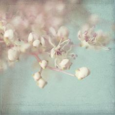 Soft Focus Photograph, Flower Photo, Title Filipendula 3, a  Fine Art Print Pink and Turquoise, Shabby Chic Wall Art on Etsy, $17.00