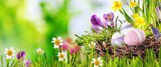 velka noc 2019 - Hľadať Googlom Plants, Blurred Background, Pictures, Plant, Planets