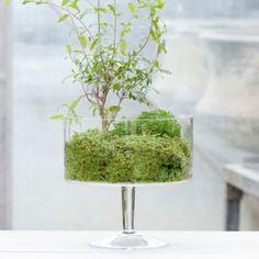 Terrain Pedestal Terrarium #shopterrain || planted with Pomegranate and Spikemoss