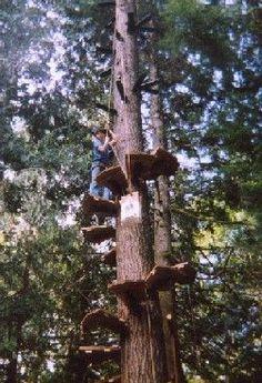 Cedar hoists up more treads as he winds his way upward around the Douglas fir tree.