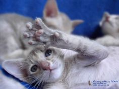 CUTE PICS PARADE | Funny kittens (6 pics).