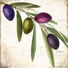 Olives Painting - Olive Branch by Mindy Sommers