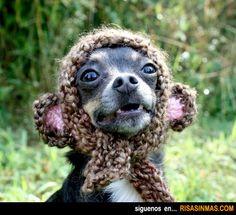 Perro con gorro de lana.