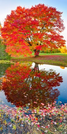 Beautiful landscape tree and reflections. Add trees with colorful foliage or striking flowers near water.