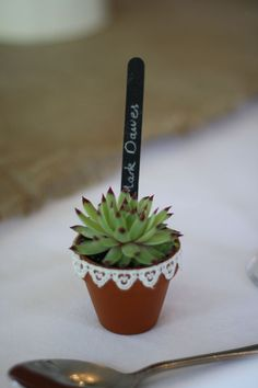 DIY succulents wedding favour: these teeny tiny pots are cheap from MAsters