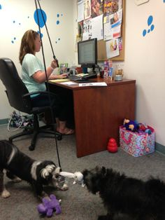Talk about multitasking! Kong Company, Dog Test, Office Dog, Dog Love, Dogs, Animals, Animales, Animaux, Doggies