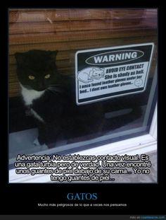 En otra vida, esta gata fue agente secreto o algo... - Mucho más peligrosos de lo que a veces nos pensamos