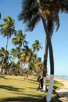 Praia de Arembepe, em Camacari, estado da Bahia, Brasil.