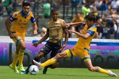 ¡Final 'felina'! Pumas vs Tigres por el título del Apertura 2015