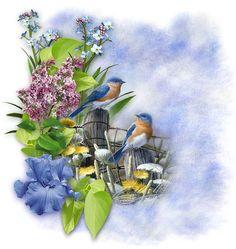 Decoupage Vintage, Photoshop, Blue Bird, Beautiful Images, Colours, Spring, Printables, Plants, Blog