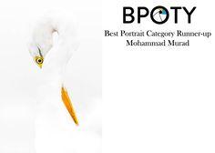 Best Portraits, Year 2016, Runners, Bird, Hallways, Joggers, Birds, Runner Rugs