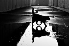 These 32 Black And White Photos Add To The Mysterious World Of Cats