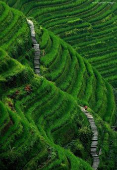 'Stairway to Heaven, Longsheng, Guilin County, China' - photo by noelcasaje images