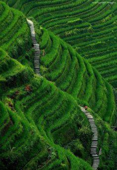 Stairway to Heaven, Longsheng, Guilin County, China
