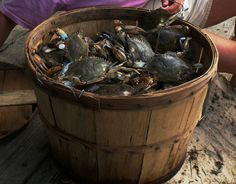 blue crabs and old bay!