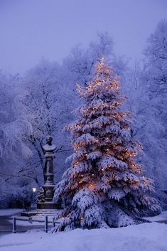Christmas Lights on Snow-Covered Christmas Tree. Winter Szenen, I Love Winter, Winter Magic, Winter Night, 2016 Winter, Winter Season, Winter Pictures, Christmas Pictures, Holiday Pics
