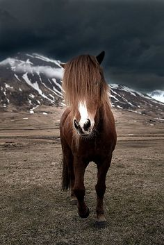 Lonesome Horse   ...........click here to find out more     http://googydog.com