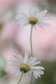 mild #flowers