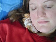 i've heard of a cat nap, but i think i like a hamster nap better lol Cute Baby Animals, Animals And Pets, Funny Animals, Syrian Hamster, Cute Hamsters, Little Critter, Snuggles, Cute Puppies, Cuddling