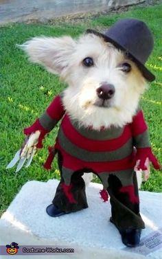 Freddy Krueger Costume <3 2012 Halloween Costume Contest