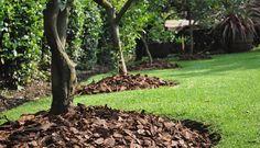 Beneficios de la corteza de pino para el jardín