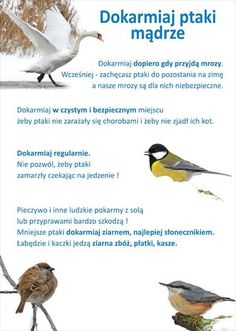 Polish Language, Math For Kids, Montessori, Birds, Teaching, Education, Animals, Flora, Children