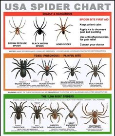 Gross but good to know: Spider Identification - Dangerous - Venomous? Spider identification of venomous and dangerous spiders most commonly found in homes, their habitat areas, venom toxicity and spider bite first aid procedures. Survival Life, Camping Survival, Outdoor Survival, Survival Skills, Camping Hacks, Wilderness Survival, Survival Gear, Camping Ideas, Emergency Preparedness