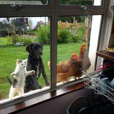 Open the door, please!