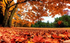 Autumn Season - Wallpapers,Backgrounds,Pictures,Photos,Laptop Wallpapers