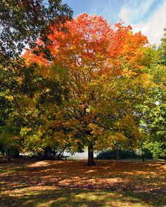 Autumn Trees, Prospect Park, Brooklyn NY by jackie weisberg, via Flickr