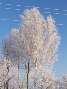 Uroki zimy