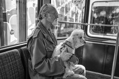 Is Your Poodle Driving You Crazy? Dog Secrets: The Fastest Way To Your Dream Poodle! Street Pictures, Man Sitting, Free Dogs, Crazy Dog, Dogs And Puppies, Dreaming Of You, Dog Lovers, Profile, Photos