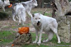 Tirage au sort « Spécial Halloween » au zoo African Safari, à Plaisance du Touch